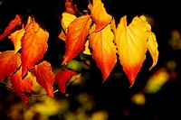 Sunlit leaves form a colorful group