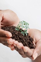 Close_up of a woman´s hands holding a seedling