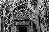 Roots overgrow Ta Prohm temple in Angkor