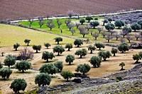 Roads in the fertile plain on Tajuña river Tielmes  Madrid Spain