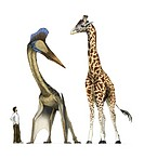 Pterosaur with human and giraffe, artwork. This pterosaur belongs to the Azhdarchidae family of gigantic pterosaurs that had wingspans of up to 11 met...