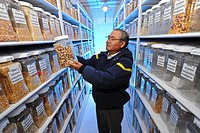 Native maize varieties. Technician looking at a collection of native Mexican maize Zea mays grains stored at the CIMMYT International Maize and Wheat ...