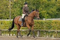 dressage _ woman riding on American Standardbred horse