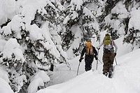 Young adults ski_tour through forest.