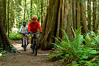 A group of three mountain bikers riding through the thick and mossy rain forest of the Olympic Peninsula.
