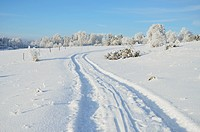 Winter landscape and tyre tracks