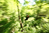 A man zips through the forest canopy during a forest tour near Asheville, North Carolina.