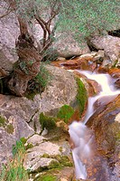 Spain, Balearic Islands, Mallorca, Corner ravine Biniaraix Mallorcan Village located in the Sierra de Tramuntana