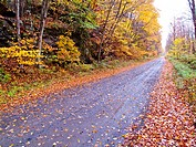 country road in the fall