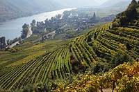 Austria, Lower Austria, Waldviertel, Wachau, Weissenkirchen, Achleiten, View of Vineyard and Danube river