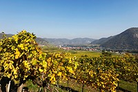 Austria, Lower Austria, Waldviertel, Wachau, Weissenkirchen, Achleiten, Vineyard and landscape with Danube river
