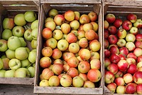 Austria, Lower Austria, Wachau, Apples in wooden box
