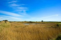 France, Pays de la Loire, Guerande, salt marsh