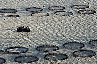 Fish farming in the gulf of Argostoli, kefalonia, Greece