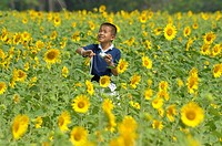 young boy flying his kite , sunflower fields of lopburi and saraburi, central Thailand