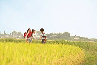 Boys and girls standing in rice field, Saitama Prefecture, Honshu, Japan