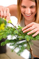 Gardening _ woman trimming spruce tree, focus on scissors