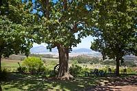 Tree standing in a garden