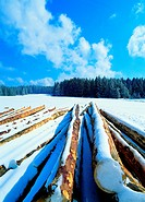 snow covered wood logs