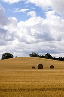 Germany, Fehmarn, bales in harvested field