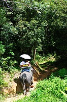 Riding elephants in the Chalong Highlands Phuket, Thailnad.