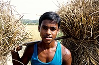 A boy carries dry straw Bangladesh
