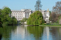 Buckingham palace from St James park lake  London  England