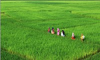 Rural children going to school walking along ridges in the midst of paddy fields Chittagong, Bangladesh September 5, 2006