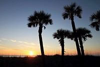 Sun setting into the Gulf of Mexico behind palm trees at St. Petersburg Beach in Florida, USA