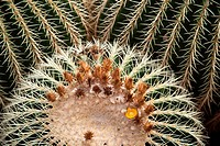 Guatiza, Cesar Manrique, Spain, Europe, Jardin de Cactus, cacti, cactus garden, cactus, Canary islands, isle, Lanzarote, plant, place of interest, suc...