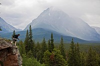 A climber preparing to rappel at Lost Boys crag with Mt Edith Cavell, Jasper National Park, Alberta, Canada