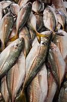 FISH MARKET IN DEIRA, DUBAI