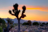 Joshua Tree National Park, California, United States of America, North America
