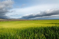 Green fields and cloudy skies, central California, USA