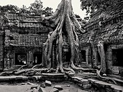Ta Prohm Temple and Tree Roots, Cambodia
