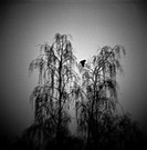 Two trees and flying bird, out of focus