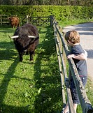 A Young Boy Looking at Long Horned Cattle