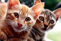 Two kittens brothers