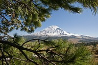 Popocatepetl volcano view with pine needles in the foreground