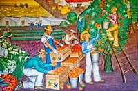Created in 1934 by artist Maxine Albro, a fresco in the Social Realism artistic style entitled 'California Agriculture' decorates the lobby of Coit To...