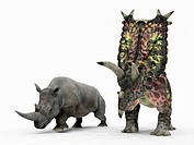 Rhino and Pentaceratops dinosaur. Artwork of an adult Pentaceratops right from 75 million years ago during the Cretaceous period, compared to a modern...