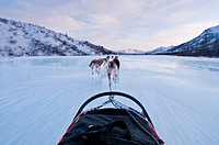 Musher´s perspective while mushing down the North Fork of the Koyukuk River in Gates of the Arctic National Park & Preserve, Arctic Alaska, Winter