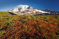 mount rainier in autumn in mt. rainier national park, washington, united states of america