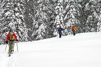Adult friends cross_country skiing in snowstorm