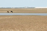 Animals, Lakes, City, Lençois Maranhense, Santo Amaro, São Luis, Maranhão, Brazil