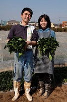 Mature Couple Harvesting Spinach