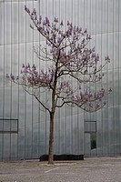 Blossom tree and steel building