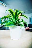 Office worker sitting at desk behind pot plant