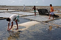 Farmers work at salt plantation field at Bashkhali It is one of the oldest and most ubiquitous of food seasonings and used to preserve food Salt is fa...