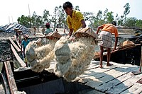 Labourers unload salt at boat that collect from a field at Bashkhali It is one of the oldest and most ubiquitous of food seasonings and used to preser...